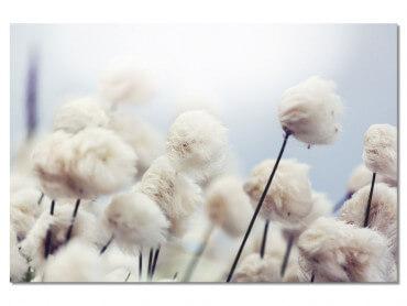 Tableau Fleurs de coton au vent