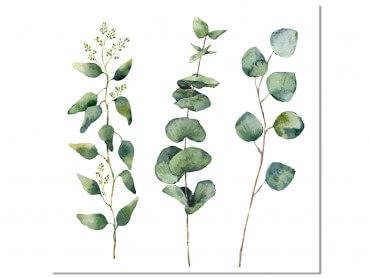 Tableau Deco aquarelle Eucalyptus
