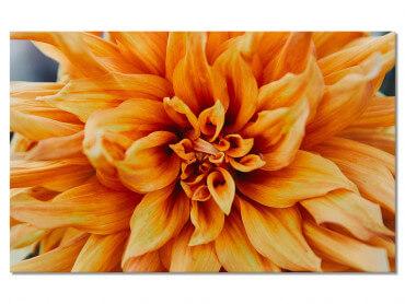 Tableau Fleurs Coeur de Chrysanthème