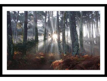 Affiche Paysage Brume Landaise