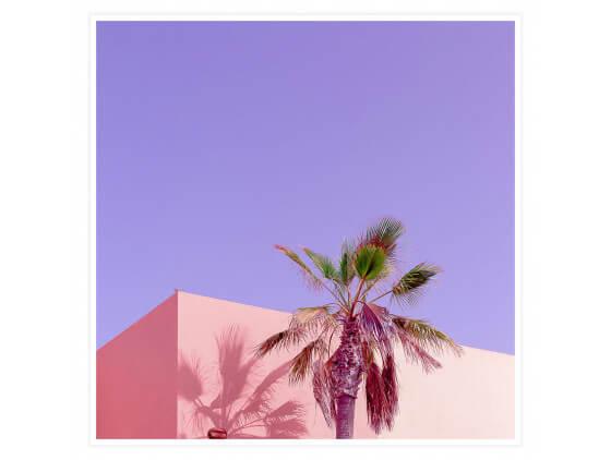Affiche photo Pink Palma