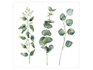 Affiche Deco aquarelle Eucalyptus