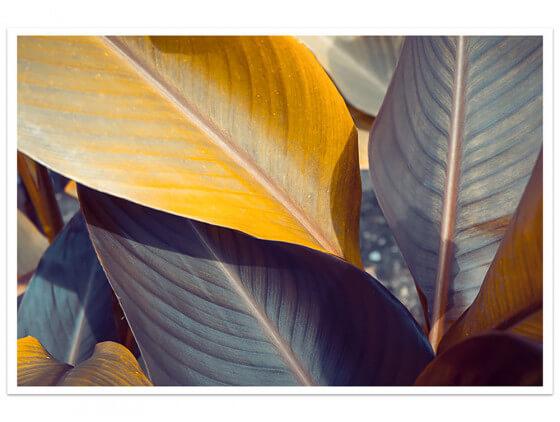 Affiche Deco Palm Leaves Y