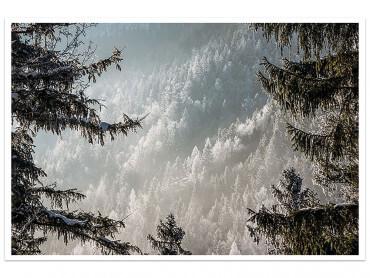 Affiche Paysage Forest in Fog Drama