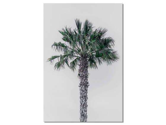 Tableau Deco Coconut Palm
