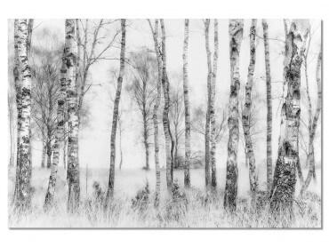 Tableau Paysage bouleaux en monochrome
