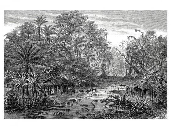 Tableau Gravure Forêt de Mangroves