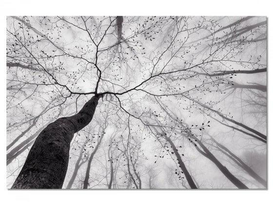 Tableau Nature Canopée en Noir et Blanc