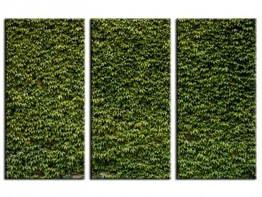 Tableau Nature Mur de lierres