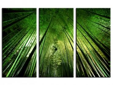 Tableau Nature Forêt de bambous à Kyoto