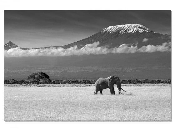 Tableau Deco Elephant et Kilimanjaro