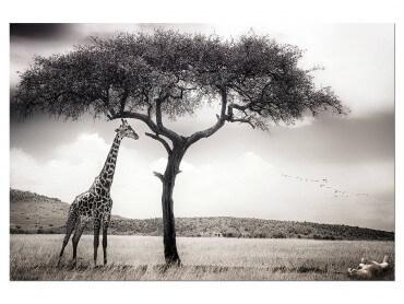 Tableau Animaux Sous le Soleil d' Afrique