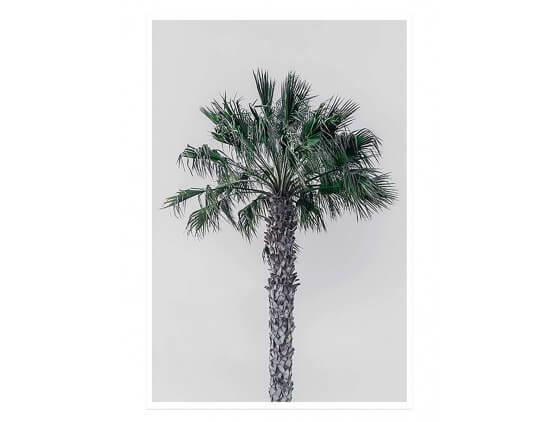 Affiche Deco Coconut Palm