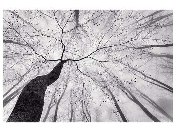 Affiche Nature Canopée en Noir et Blanc