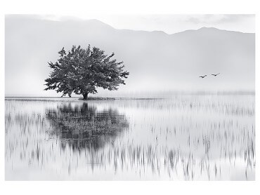 Affiche Nature Reflets d'eau