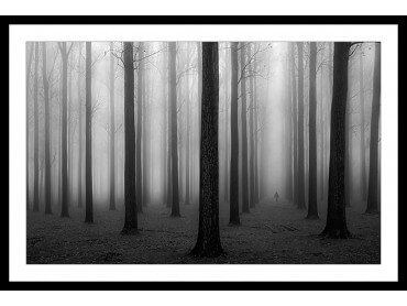 Affiche Nature foggy weather