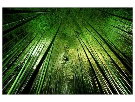 Affiche Nature Forêt de bambous à Kyoto