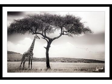 Affiche Animaux Sous le Soleil d' Afrique
