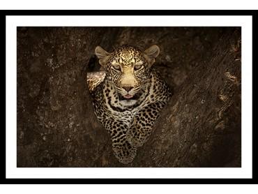 Affiche Masai Léopard