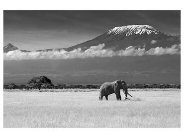 Affiche Deco Elephant et Kilimanjaro