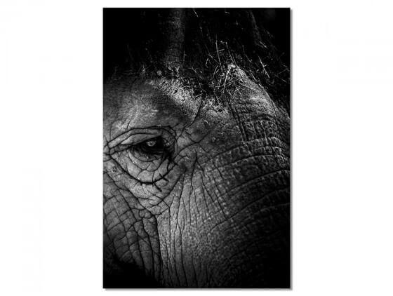 Tableau Deco Eléphant Close Up