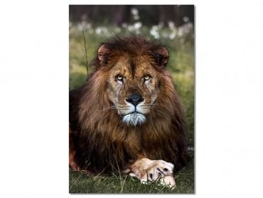 Tableau Animaux Pattes de Lion