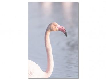Tableau Pastel pink flamingo