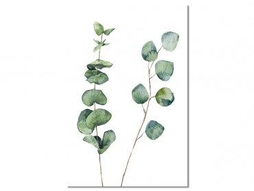 Tableau Nature Aquarelle feuille d' Eucalyptus
