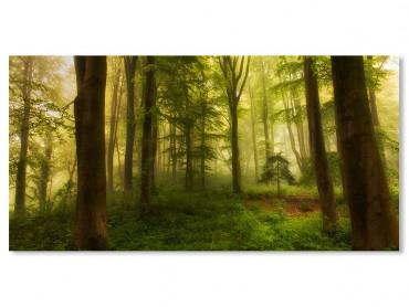 Tableau Paysage Forêt et Sous bois