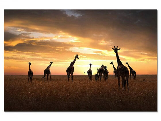 Tableau Animaux Girafes Family