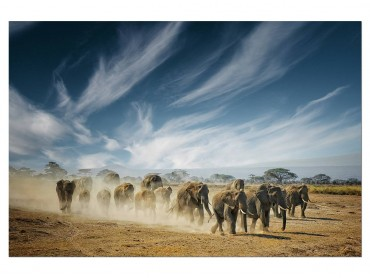 Tableau Animaux Elephant Family