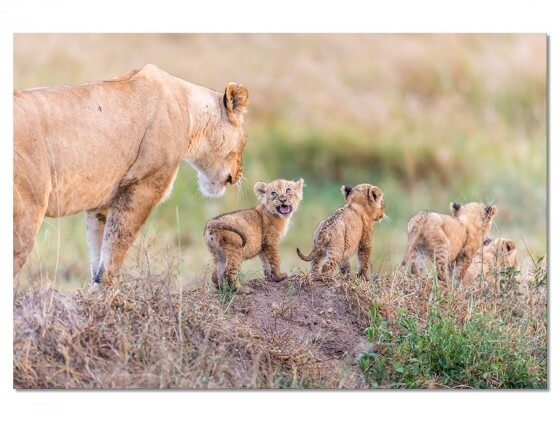 Tableau Animaux Let's Go Mom