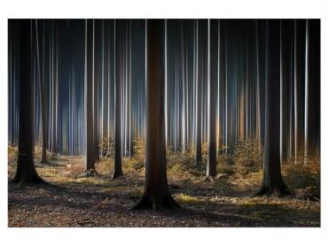 Tableau Paysage Forêt fantastique