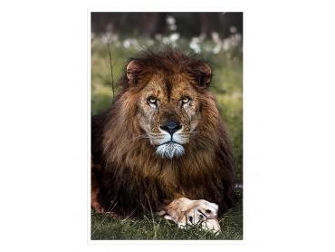 Affiche Animaux Pattes de Lion