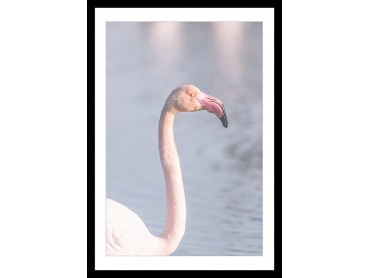 Affiche Pastel pink flamingo