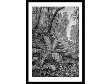 Affiche Paysage Jungle indienne