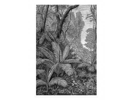 Affiche Paysage Jungle indienne