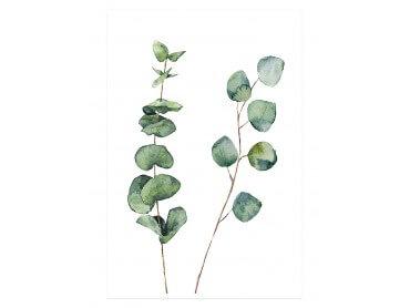 Affiche Nature Aquarelle feuille d' Eucalyptus