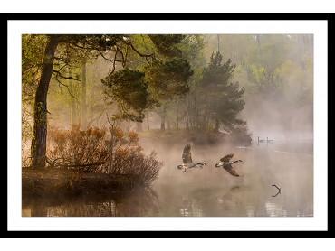 Affiche Paysage Oies sauvages