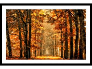 Affiche Paysage Magie de l' automne