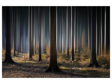 Affiche Paysage Forêt fantastique