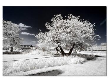 Tableau Paris - Jardin blanc comme neige