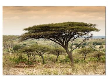 Tableaux Animaux Impala d'Afrique