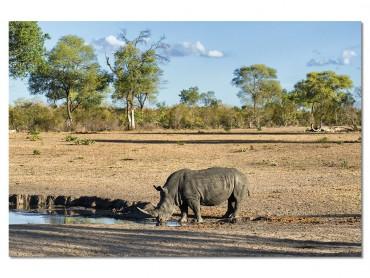 Tableau Animaux Awa le Rhino