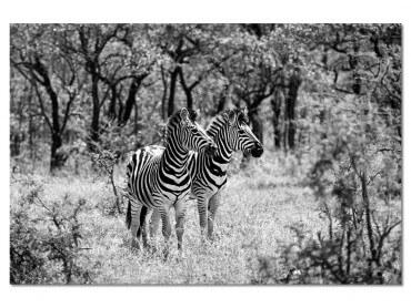 Tableau Animaux Savane en Noir et Blanc