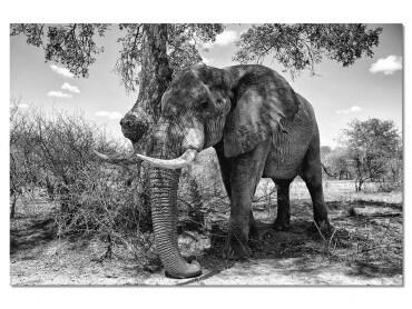 Tableau Elephant ...Pause ombragée
