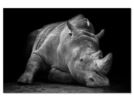 Tableau Animaux Strong Rhino