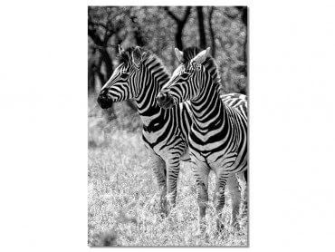 Tableau Animaux Zebre en duo