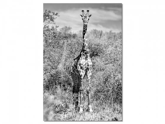 Tableau Animaux Girafe en instantanée