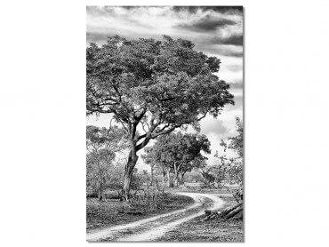 Tableau Photo au détour de la savane